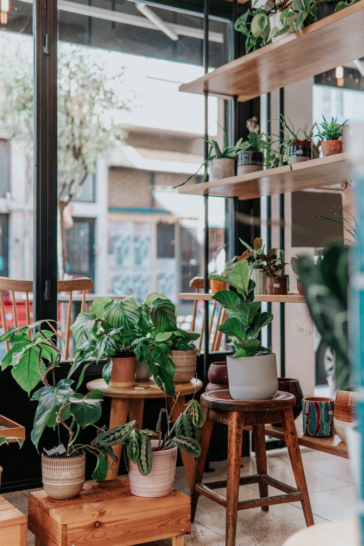 Bitkileriniz için Oda Nemlendirme Önerileri